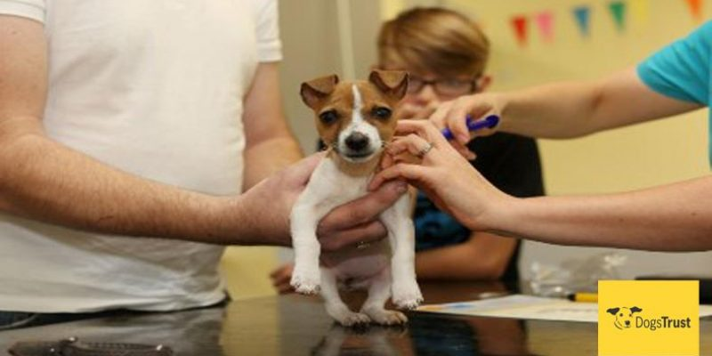 Free Micro-chipping at Dogs Trust Rehoming Centre on March 5th and March 19th to celebrate National Chipping March!