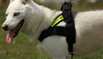 Buy Reflective Dog Harness Pet Vest with Leash Comfortable Breathable- $ 2.99
