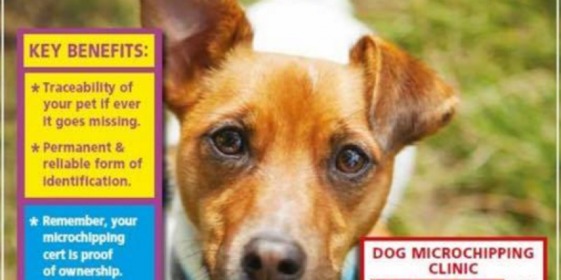Expired:Dog Microchipping at Maxi Zoo €10 – Compulsory Microchipping to come into Law next week