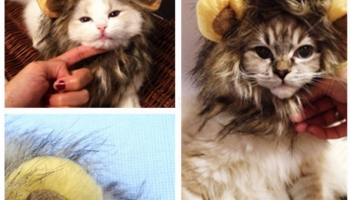Cute Fancy Dress Cat Lion Mane with Ears – $ 3.99