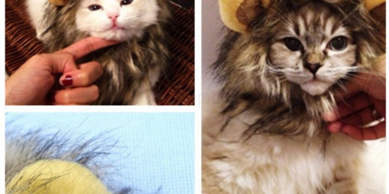 Cute Fancy Dress Cat Lion Mane with Ears – $ 3.99